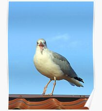 Seagull on the Rooftop Poster