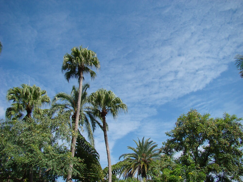 Florida palm trees by Albert1000