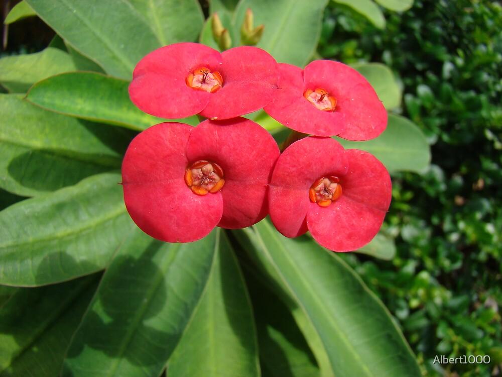 Florida flower #3 by Albert1000