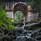 Lennox Bridge Fern by STEPHEN GEORGIOU PHOTOGRAPHY