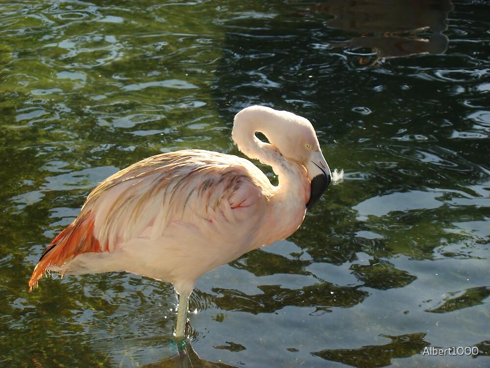 Pink flamingo by Albert1000