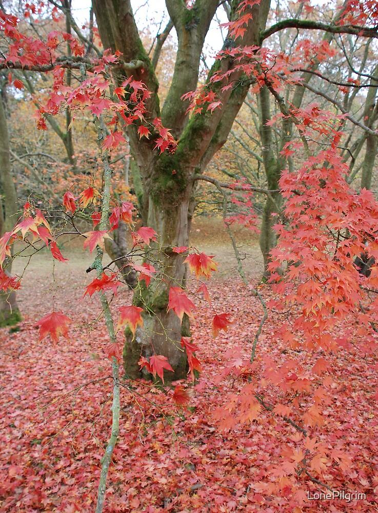 Red Tree by LonePilgrim