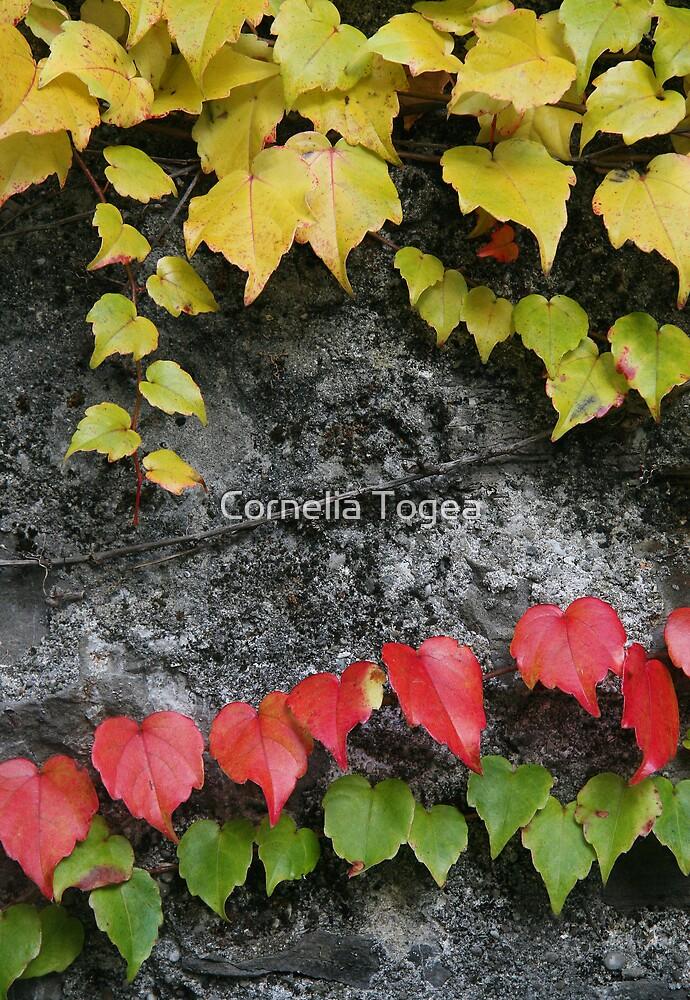 colored ivy by Cornelia Togea