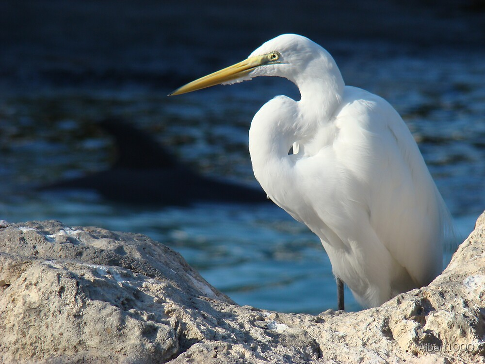 Florida bird by Albert1000