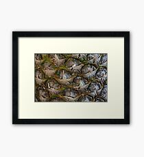 Pineapple skin abstract Textured  background  Framed Print