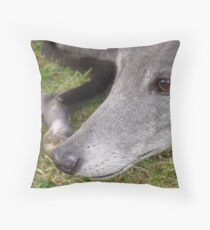 Greyhound up close Throw Pillow
