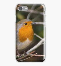 Robin forest iPhone Case/Skin