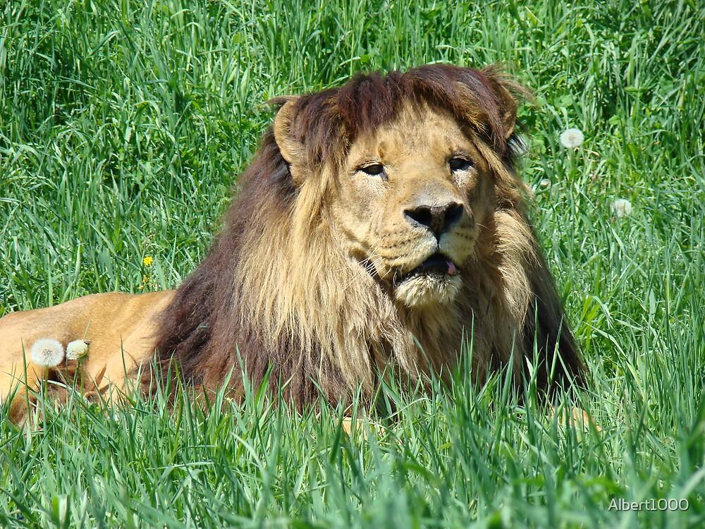 It's a lion by Albert1000