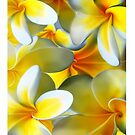 frangipani by Cliff Vestergaard