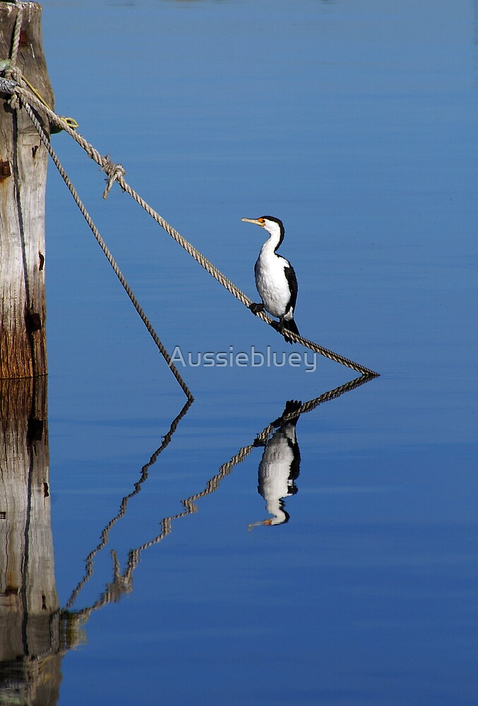 Cormorant in reflection. by Aussiebluey