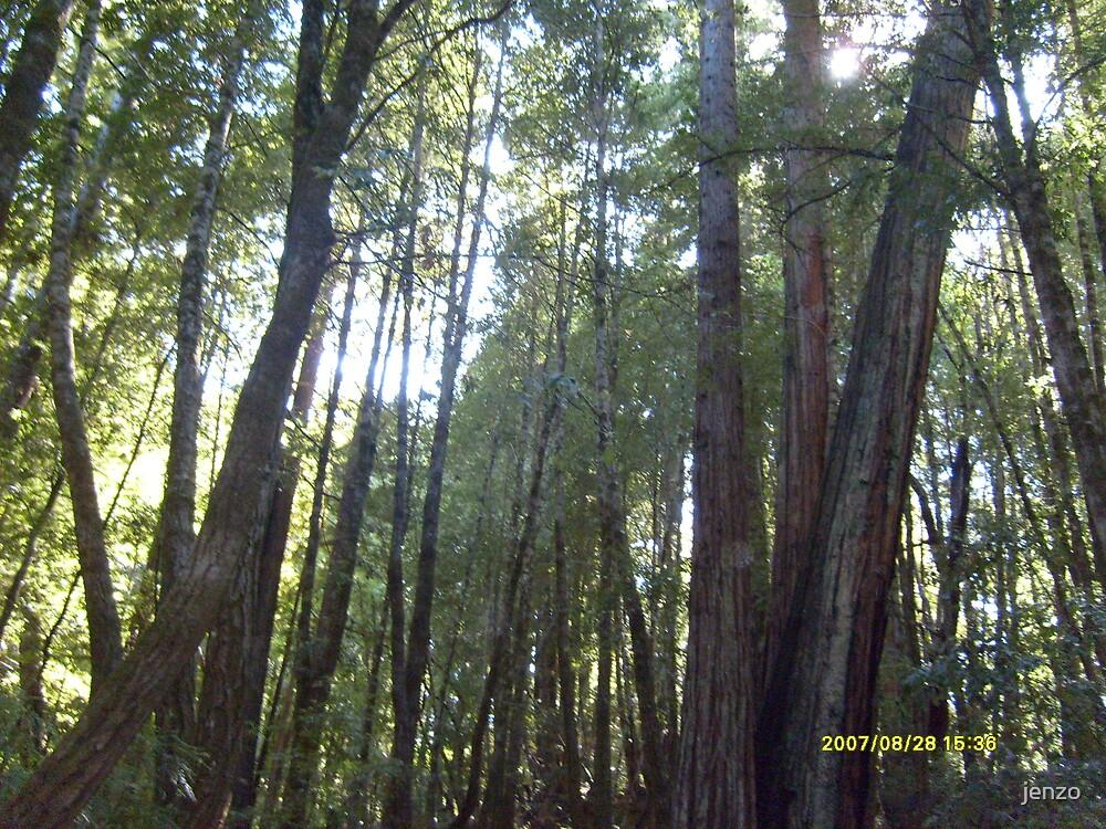 redwoods by jenzo