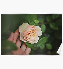 White flower with hand Poster