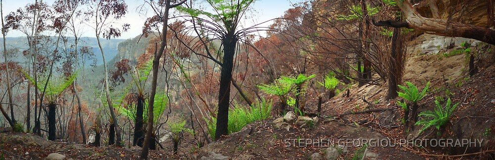 New Life emerges after the Bushfire's in Blackheath 2007 by STEPHEN GEORGIOU PHOTOGRAPHY