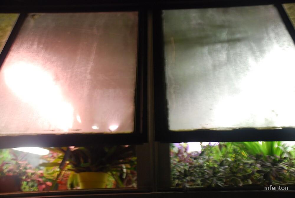 Greenhouse Windows by mfenton