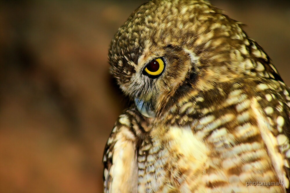 Shy Owl by photomama4