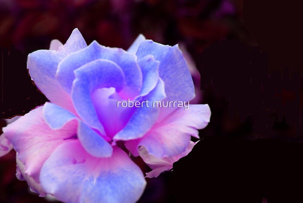 Blue Rose by robert murray