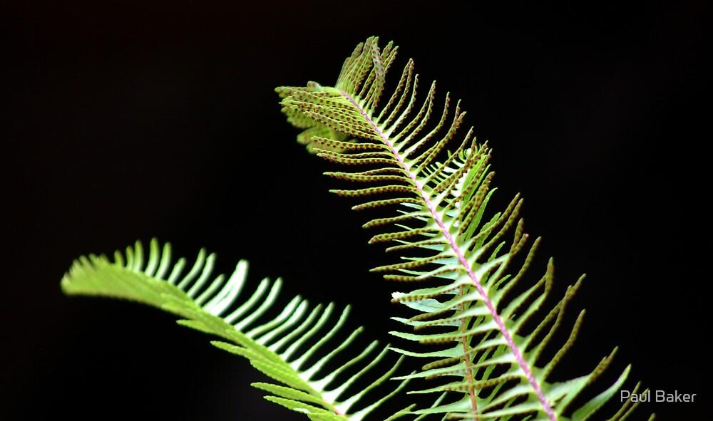 Peace Ferns by Paul Baker
