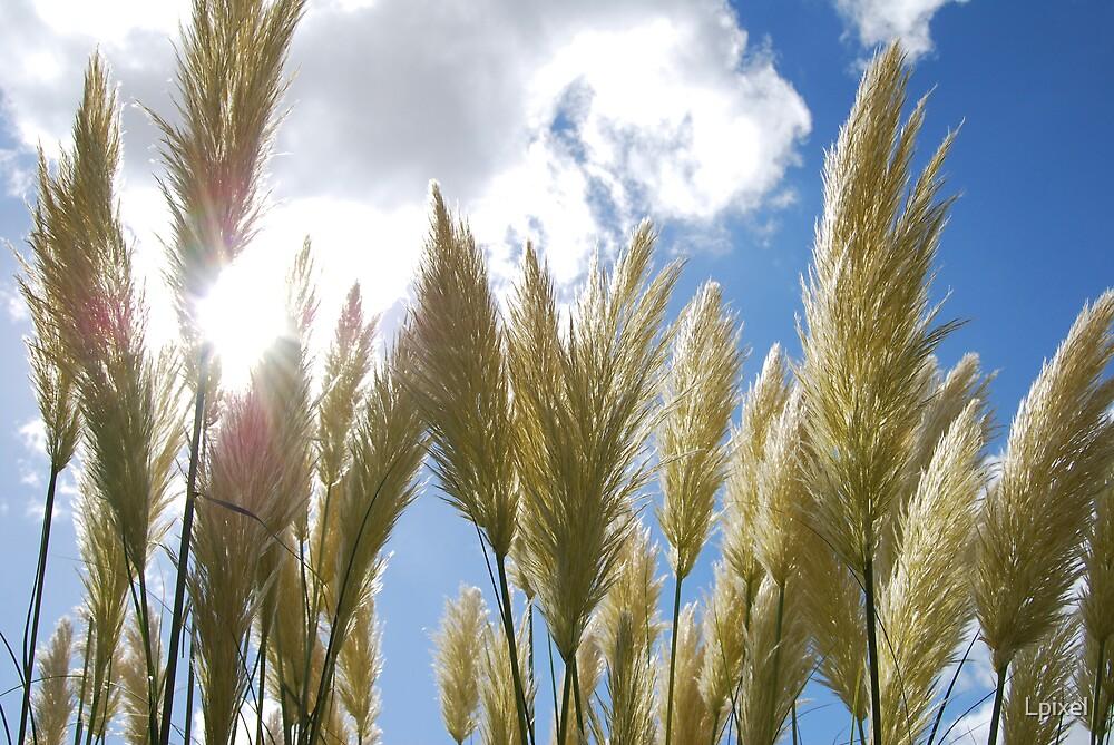 Pampass grass by Lpixel