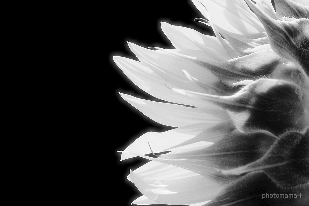 Black and White by photomama4