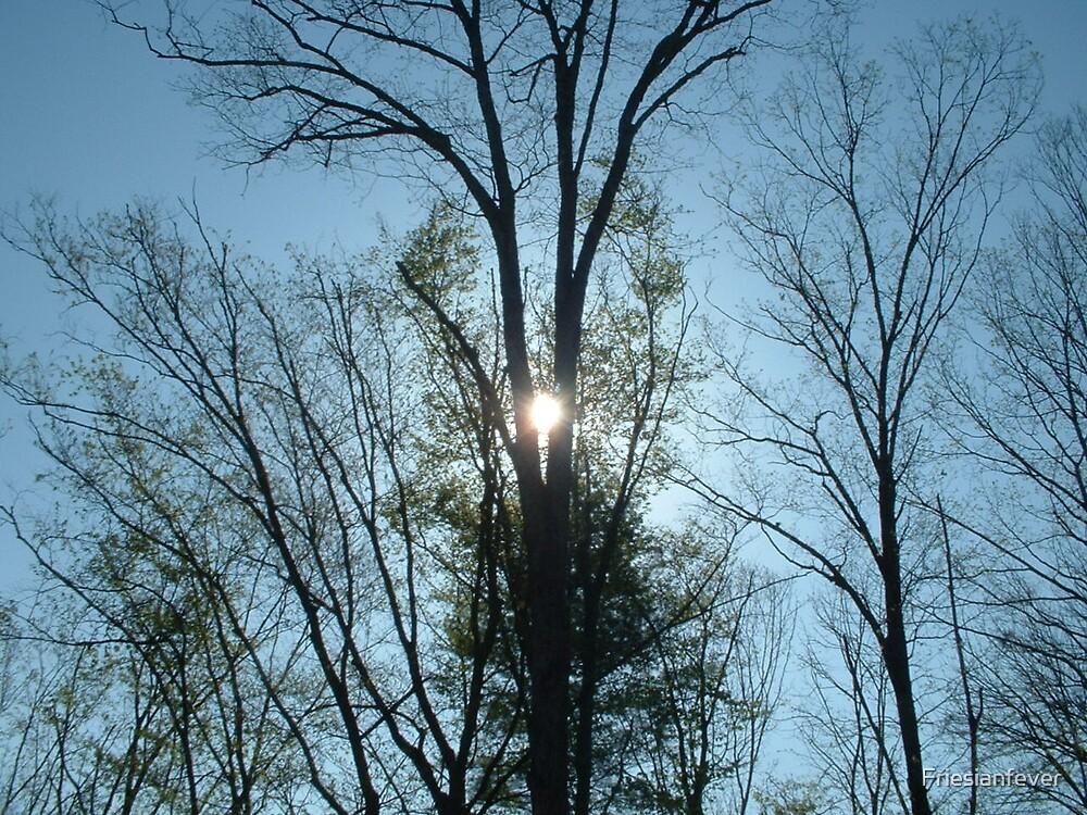 Sun Beams by Friesianfever