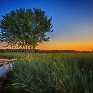 Green of Summer Moon Setting by Owed To Nature