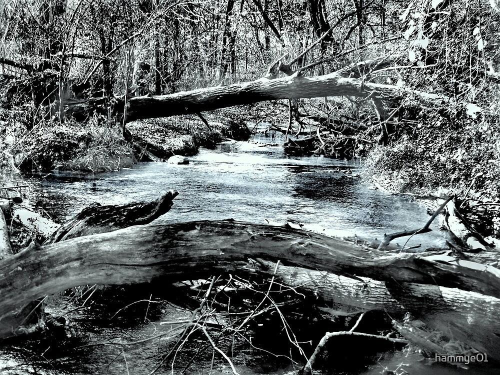 Down by the Creek by hammye01