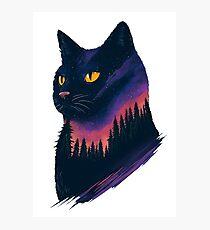 midnight cat Photographic Print