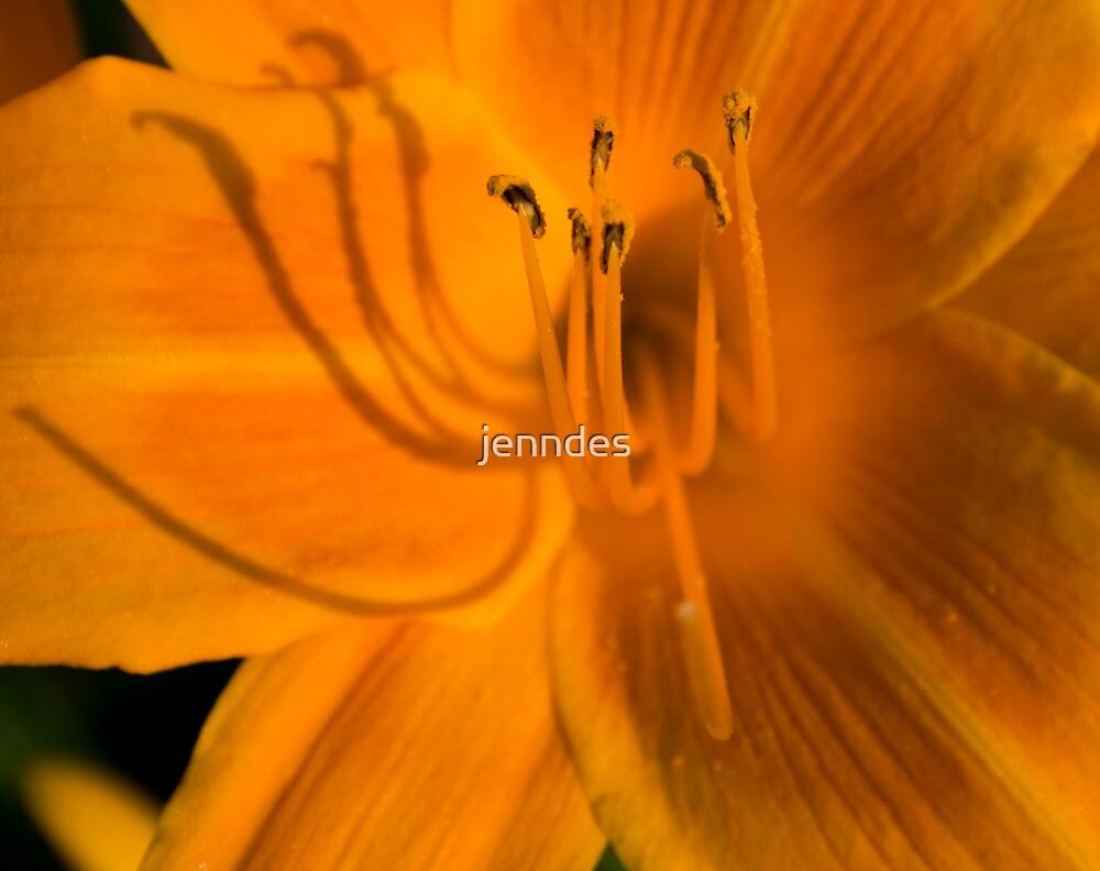 Orange DayLily by jenndes