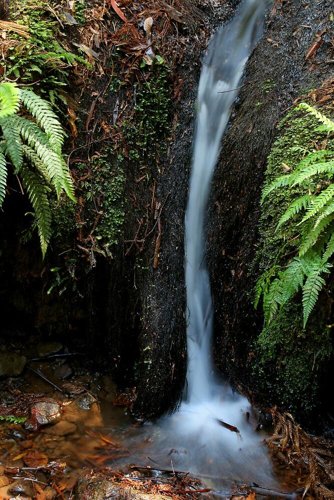 Badger Creek by Lindsay Knowles