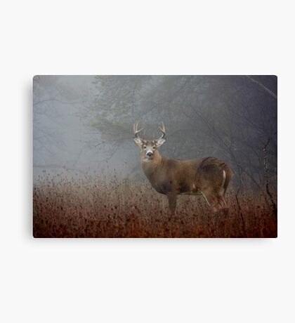 Big Buck - White-tailed deer Canvas Print