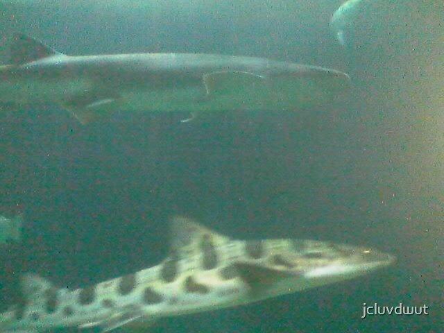 Sharks by jcluvdwut