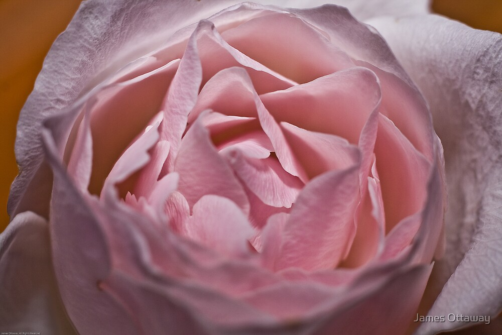 Pink Love by James Ottaway