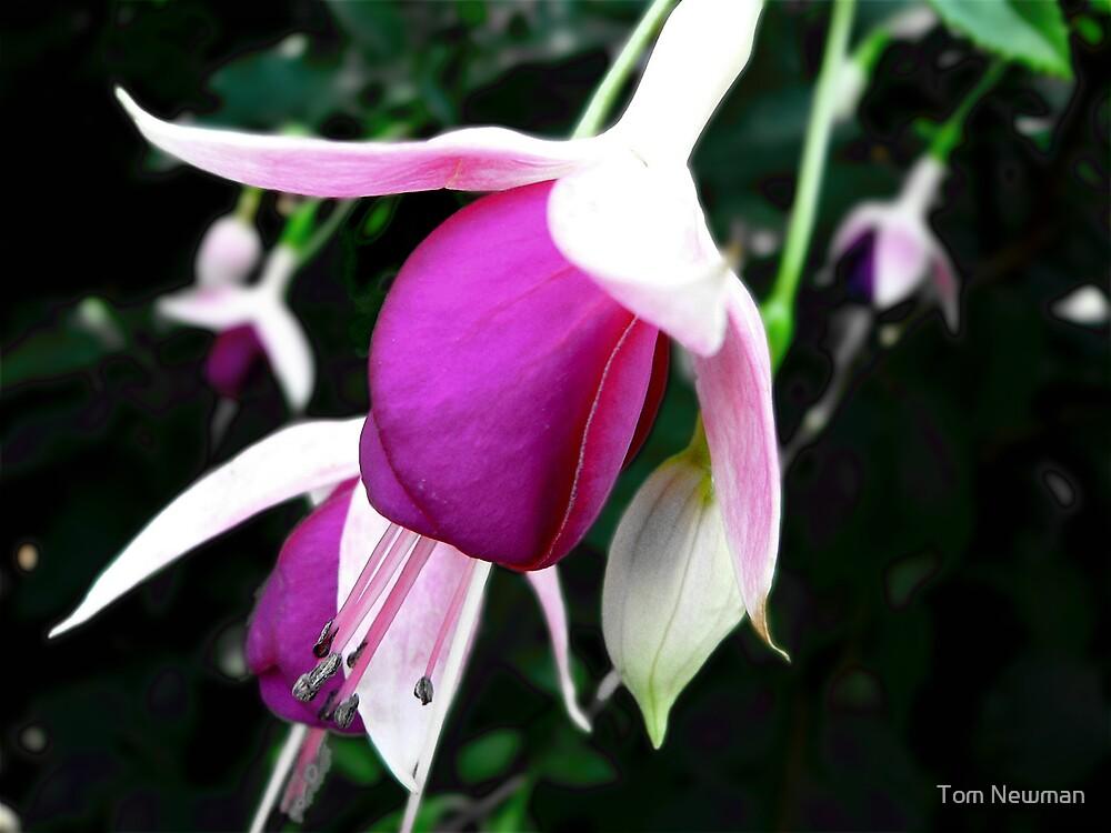 Fuchsia III by Tom Newman