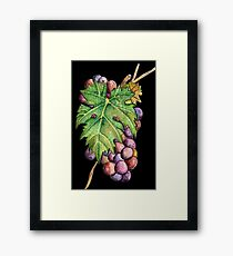 Colorful Wine Grapes Framed Print