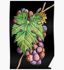 Colorful Wine Grapes Poster