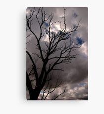 Cold Tree VII Canvas Print