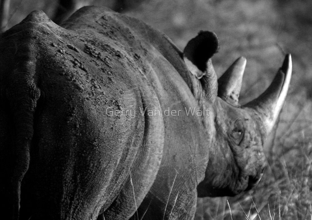 Black Rhino Side View - in B&W by Gerry Van der Walt