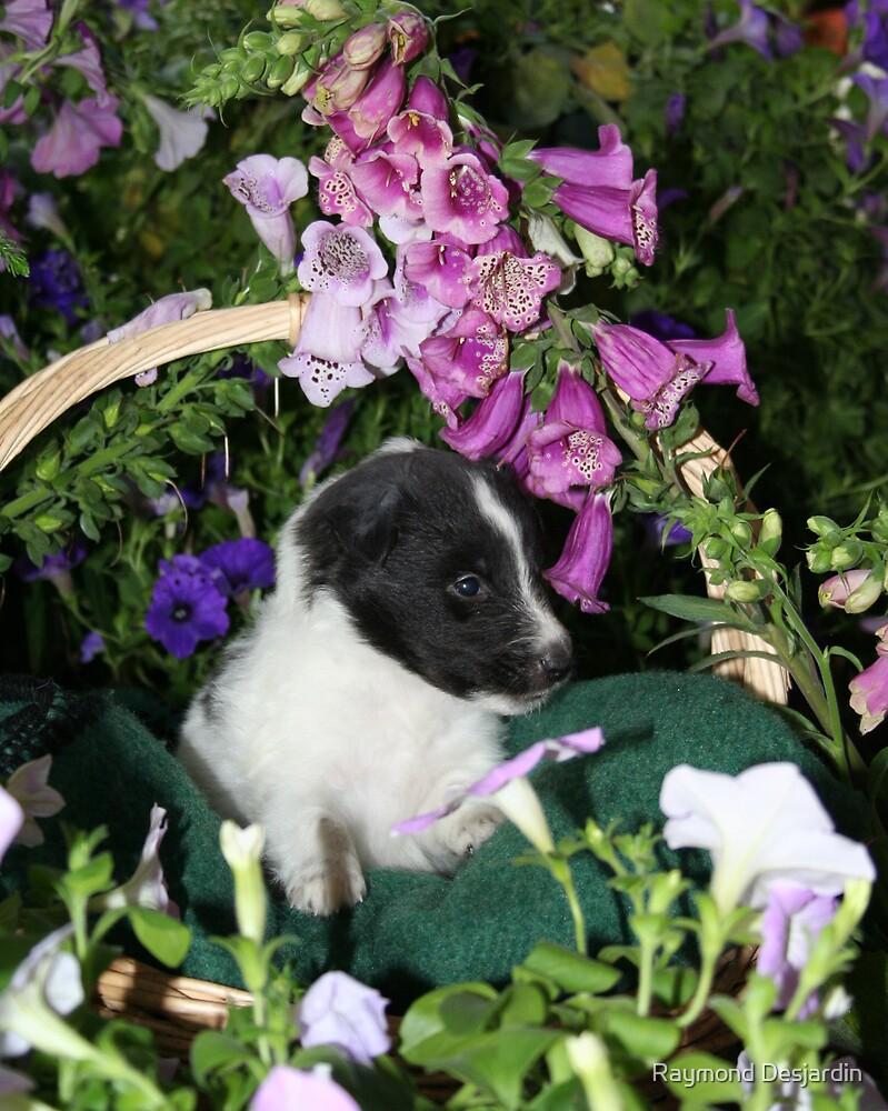 pup in flowers by Raymond Desjardin
