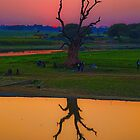 Myanmar. Taungthaman Lake. Lonely Tree after Sunset. by vadim19