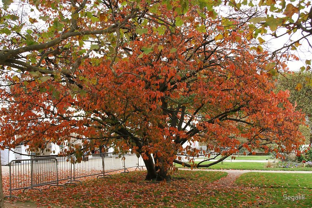 Fall at the Jardin des Plantes by Segalili
