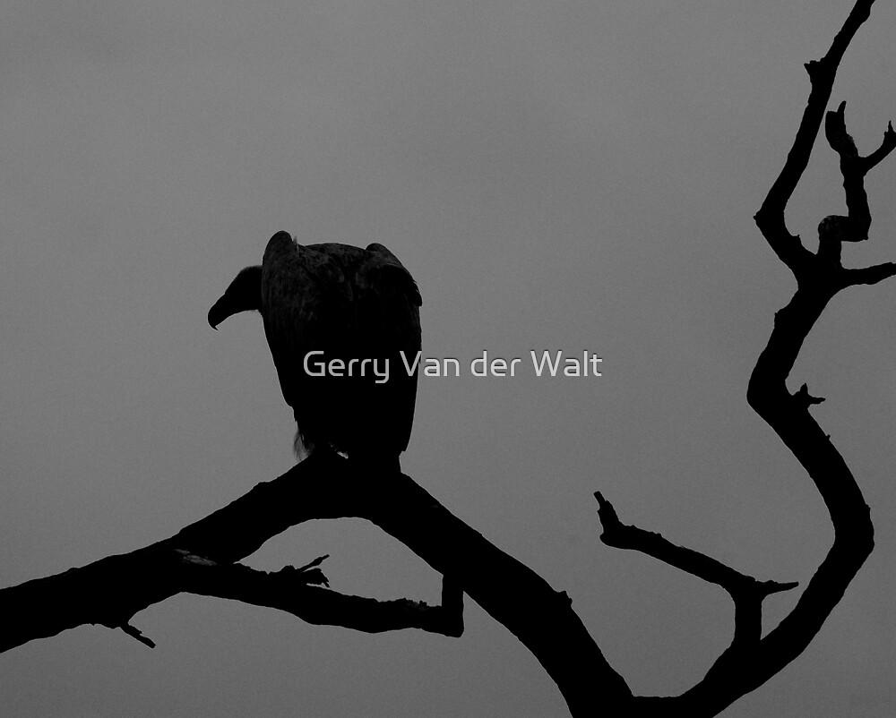 Vulture Silhouette by Gerry Van der Walt