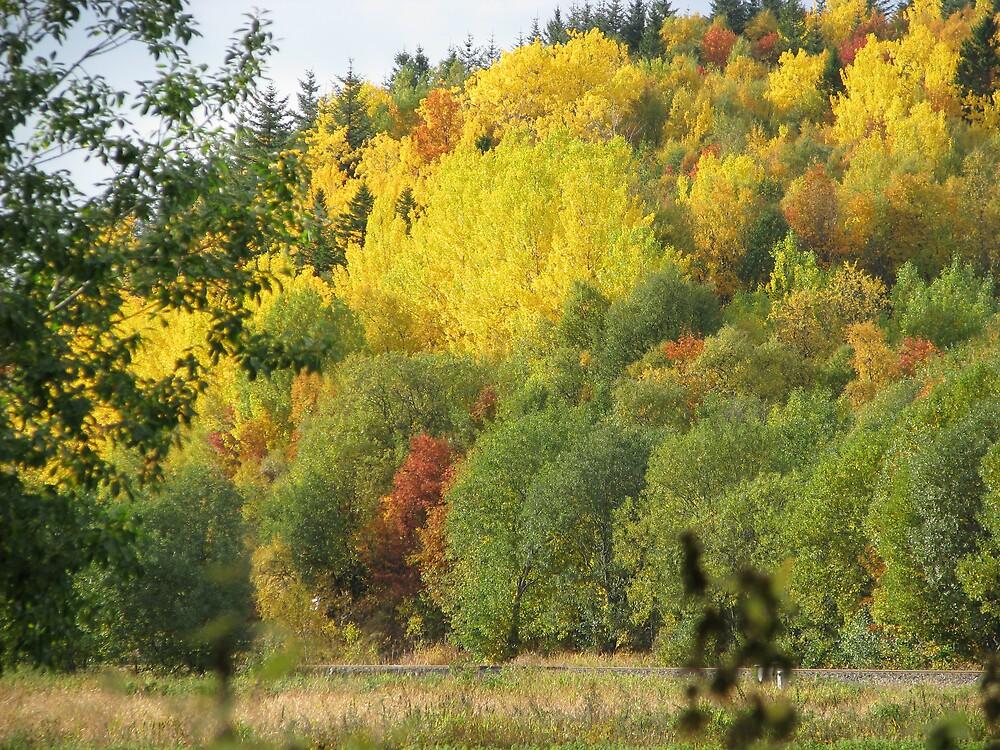 Autumn in colours by Loklok