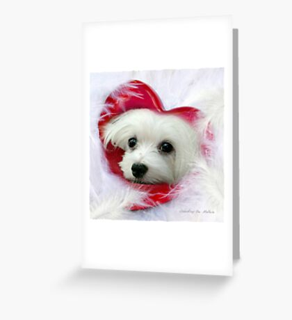 Snowdrop the Maltese - Forever in my Heart Greeting Card