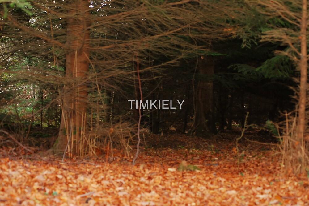 IM AFFRAID OF THE DARK by TIMKIELY