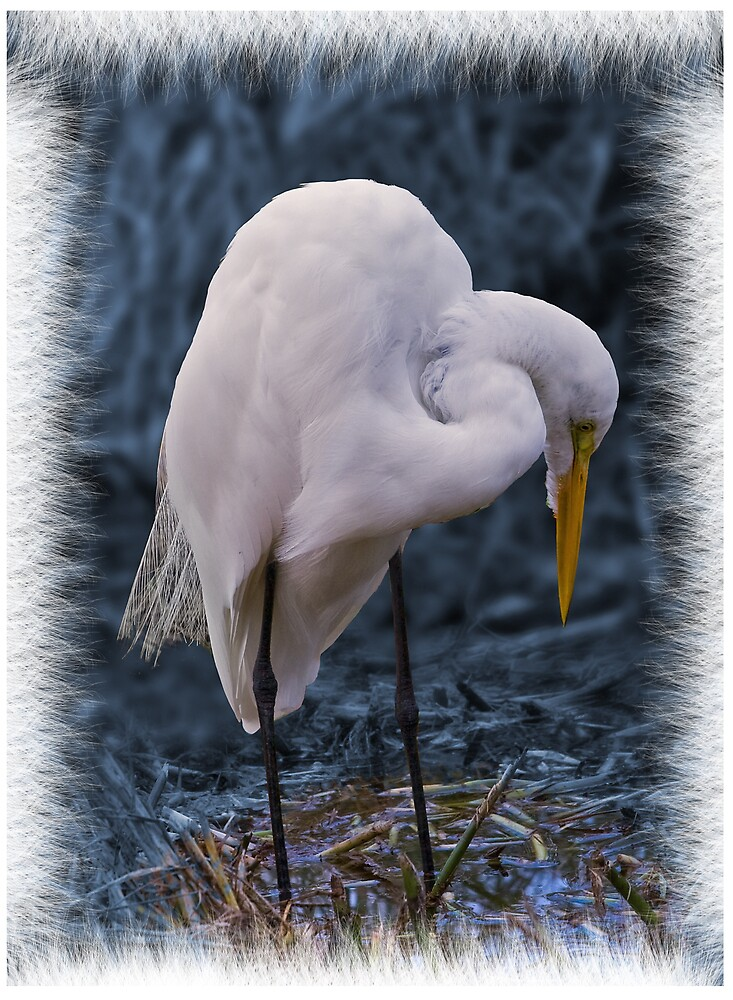 Great Egret Looking Below Card by Delores Knowles