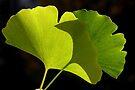 green pair by yvesrossetti