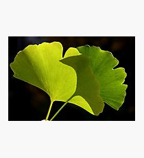 green pair Photographic Print