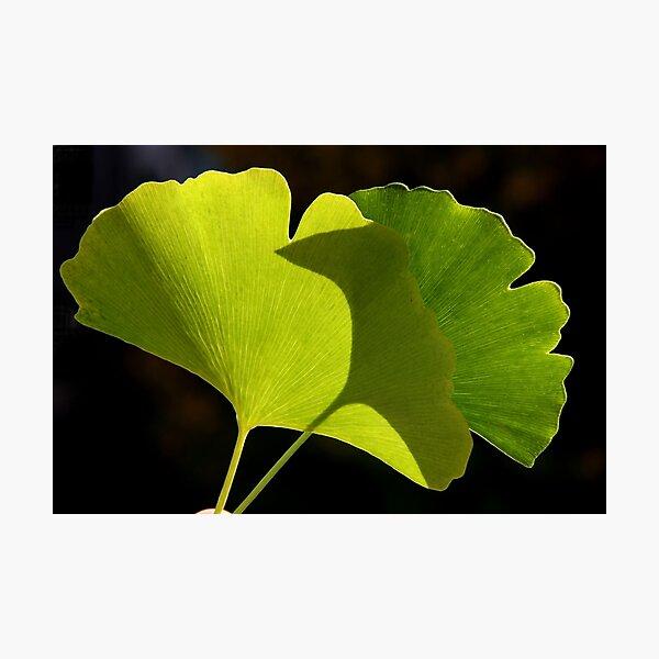 green pair Photographic Print