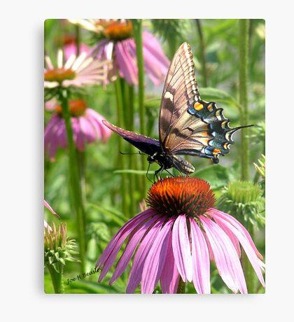 papillon sur la fleur Metal Print
