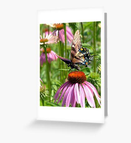 papillon sur la fleur Greeting Card